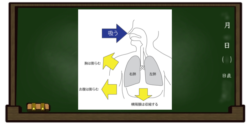 呼吸法 自然呼吸 息を吸う
